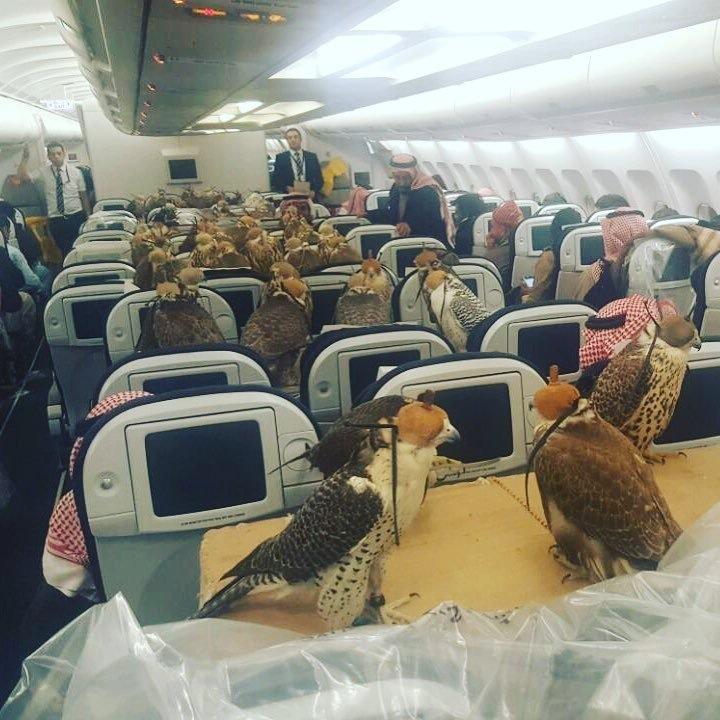 saudihawks