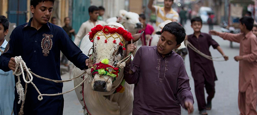 Has govt imposed new rules on purchase of sacrificial animals before